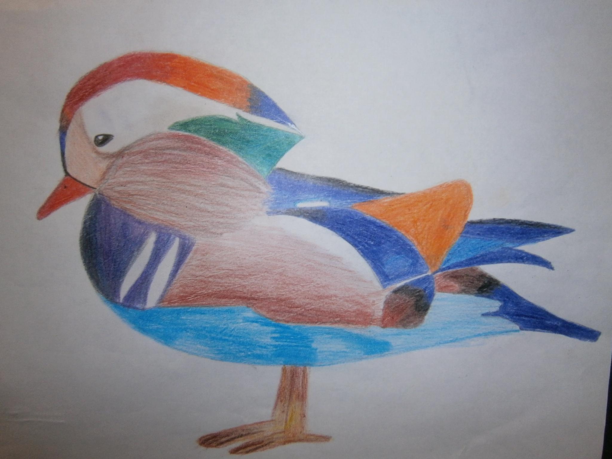 Рисование птичка фото